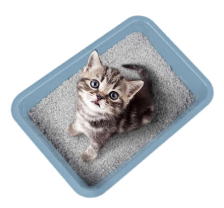 Cat sitting in litter box isolated on white Archivio Fotografico