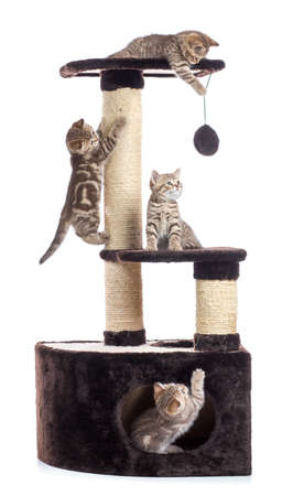Cat tree scratching post or activity centre. Kittens playing around isolated