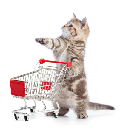 Funny kitten cat with shopping cart isolated Zdjęcie Seryjne