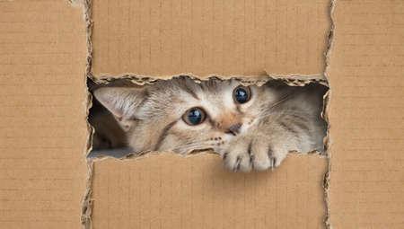 Little cat looking through cardboard hole