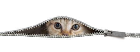 Lustige Katze im offenen Reißverschlussloch isoliert