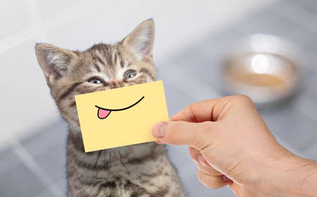 funny cat with smile and tongue on cardboard sitting near food Standard-Bild - 119270197