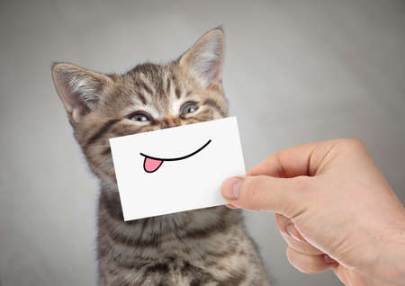 funny cat smiling with tongue Standard-Bild - 119270199