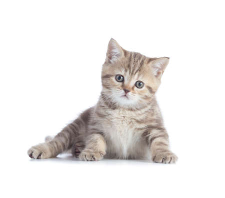 Adorable kitten lying isolated and looking directly to camera Standard-Bild - 119270204