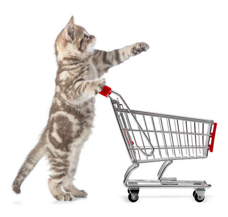 cat with shopping cart isolated Standard-Bild - 119270210