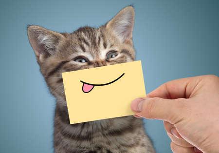 glückliches Katzenportrait mit lustigem Lächeln und Zunge Standard-Bild