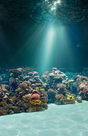 Underwater shot with coral reef Banco de Imagens - 116952643