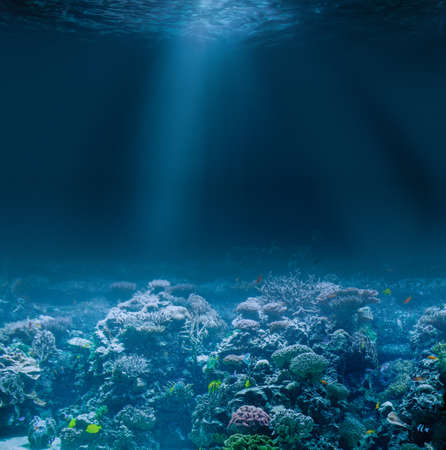 Sea or ocean seabed with coral reef Standard-Bild - 116952644