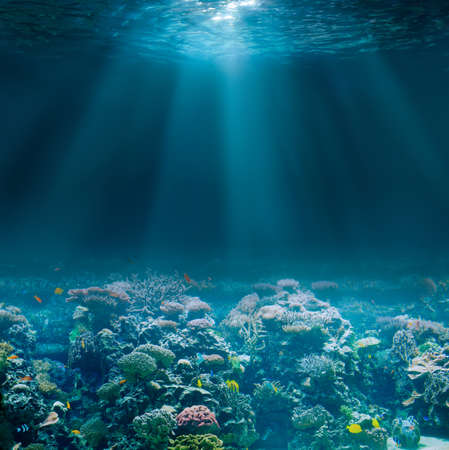 Sea or ocean seabed with coral reef. Underwater view. Standard-Bild