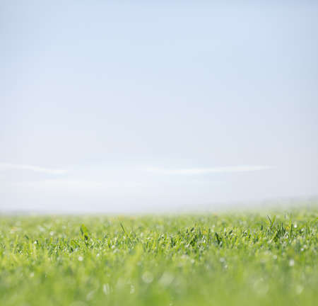 Green grass and clear sky as nature background Standard-Bild - 117269220