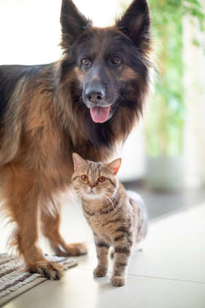 Cat and dog living together. Friendship between animals. Standard-Bild - 119270068