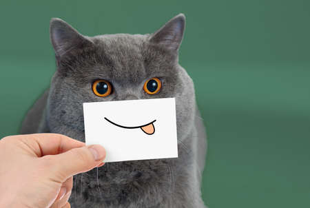 Funny cat portrait with smile and tongue Standard-Bild - 119269777