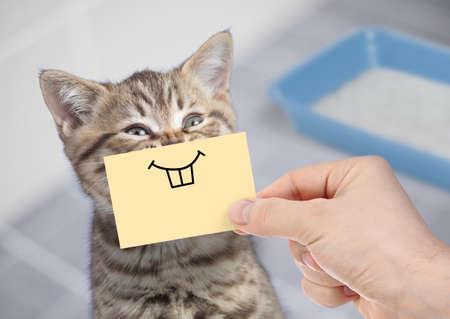 Gracioso gato con sonrisa sobre cartón sentado cerca de la caja de arena