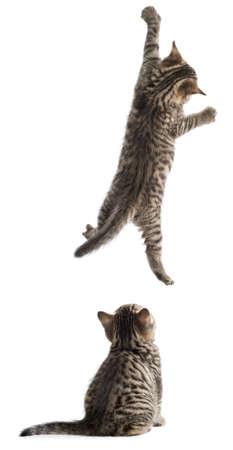 Lustige Katzen hängen und sitzen isoliert Standard-Bild