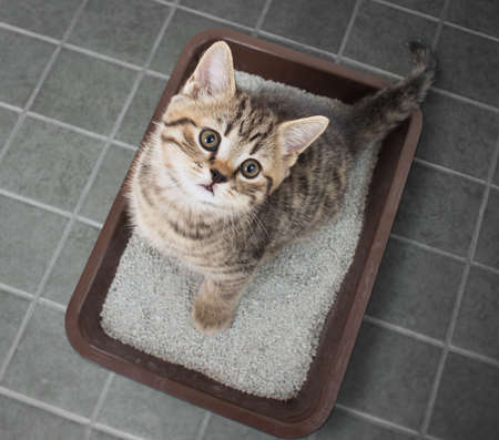 Cat top view sitting in litter box