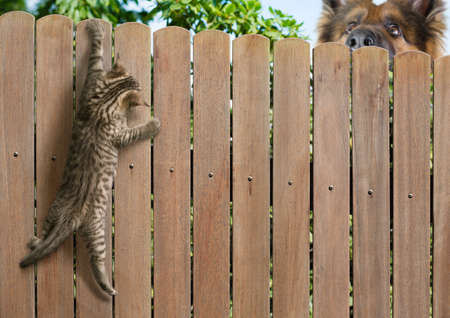 Funny kitten hanging on fence and big dog behind Фото со стока