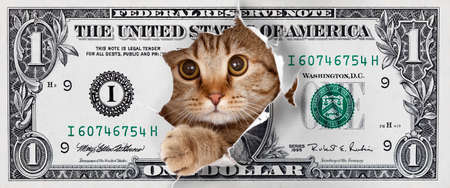 cat looking up in one dollar torn hole Imagens