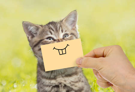 Funny cat portrait with smile on green grass outdoor