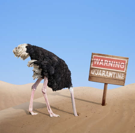 scared ostrich with head in sand near warning quarantine wooden signboard.