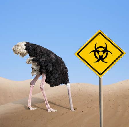 scared ostrich with head in sand near warning quarantine bio hazard signboard.