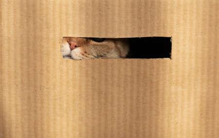 cat nose through cardboard hole