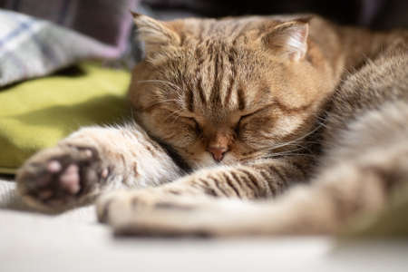 cat sleeping on cosy sofa Standard-Bild