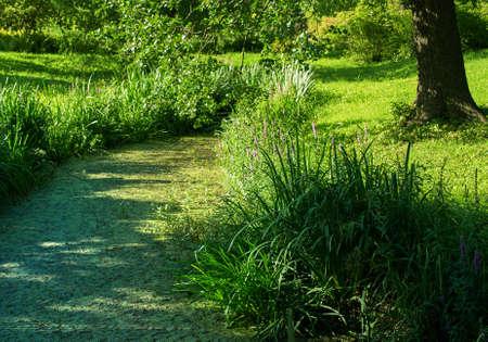 wetland: summer wetland pond the bright sun