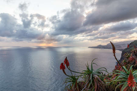 Red aloe flowers on the background of the ocean, sunset sky and dramatic clouds