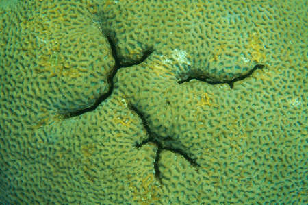 anthozoa: Coral, close-up, Red Sea, Egypt, Africa