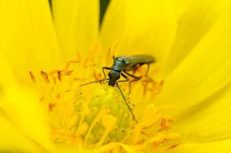 bug sits on a yellow flower