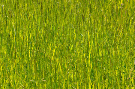 Green grass. Lake Baikal, Siberia, Russian Federation.