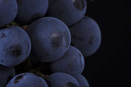 Close up, ripe dark grape berry isolated on black background. Stock Photo