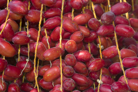 Closeup, Ripe red fruits dates swaying to the wind on date palm. Background red fruits dates Фото со стока
