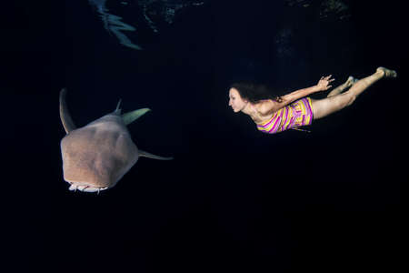 Woman swim with shark in the nigdht. Woman dives to Tawny nurse sharks (Nebrius ferrugineus) in Indian Ocean