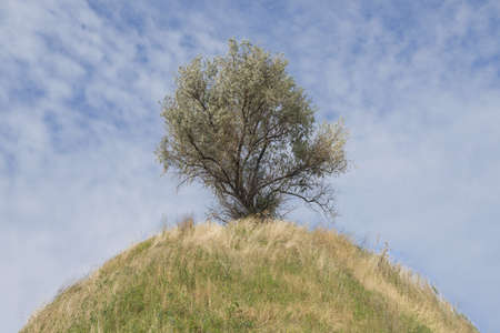 Lonely tree on top of a hill on blue sky background. Silverberry or Wolf-willow (Elaeagnus commutata) on the top of the Scythian mound, Nikopol region, Ukraine, Eastern Europe