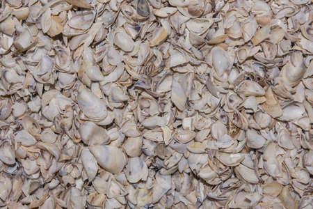 Natural shells background. Zebra mussel (Dreissena polymorpha), Kakhovka Reservoir, Dnieper River, Nikopol region, Ukraine, Eastern Europe