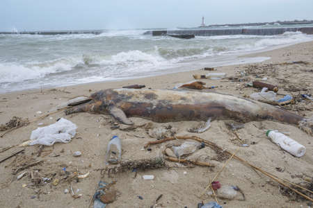 Dolphin thrown out by the waves lies on the beach is surrounded by plastic garbage. Bottles, bags and other plastic debris near is dead dolphin on sandy beach. Plastic pollution killing marine animals