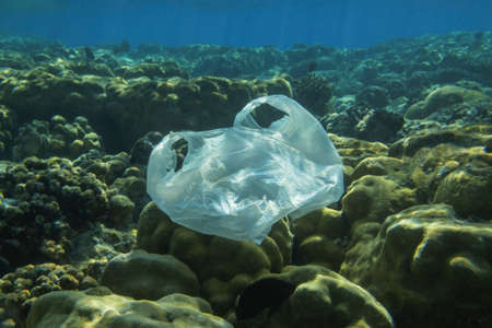 Used white plastic bag slowly drifting underwater over coral reef in the sun lights. Plastic debris underwater. Plastic garbage environmental pollution problem