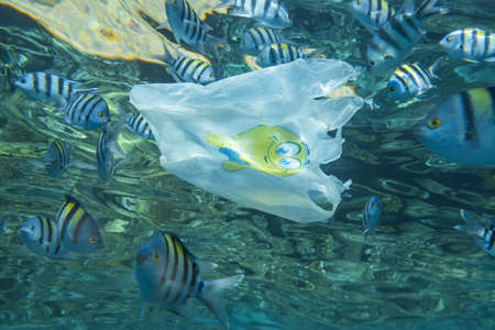 Plastic pollution, Close-up of white plastic bag with yellow smiley slowly drifting under surface of water with school of tropical fish. Reklamní fotografie
