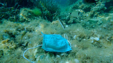 Used face mask lies on seabed nearby swims school of wrasse fish. Coronavirus COVID-19 is contributing to pollution, as discarded used masks clutter polluting seas and ocean along with plastic trash Reklamní fotografie