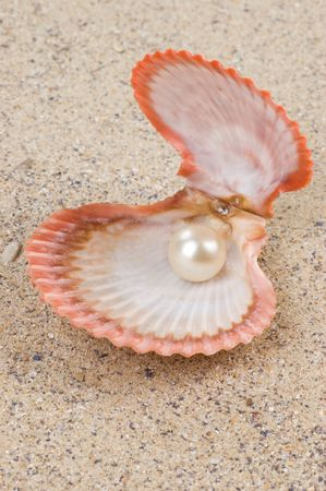 pearl shell: Open shell with pearl inside on the sand