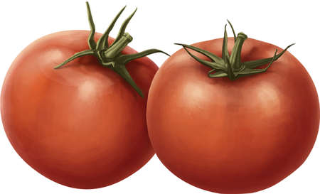 two tomatoes on a white background Stock Photo - 20900999