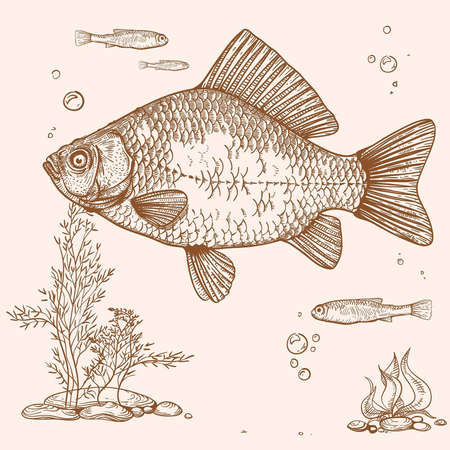 engraving of fish, seaweed, eggs and fry Vector