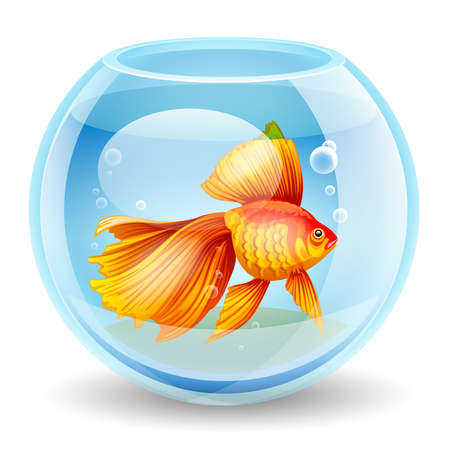 tank fish: Realistic and detailed vector illustration of a goldfish in an aquarium on white background Illustration