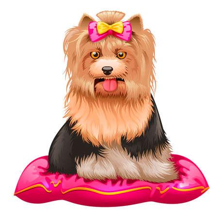 lap dog: illustration of little Yorkshire Terrier sitting on pillow