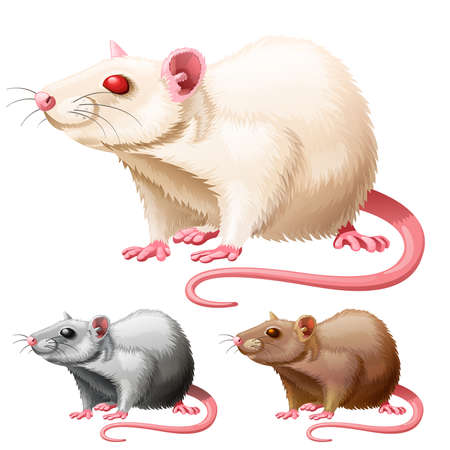 illustration of three lab rats on white background Vector