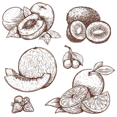 vector set of engraving illustration of sweet fruits and berries Ilustração