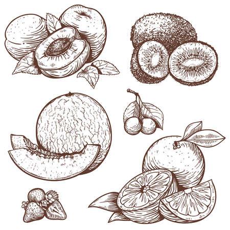 vector set van de gravure illustratie van zoete vruchten en bessen