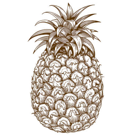 cut outs: vector engraving illustration of  pineapple on white background