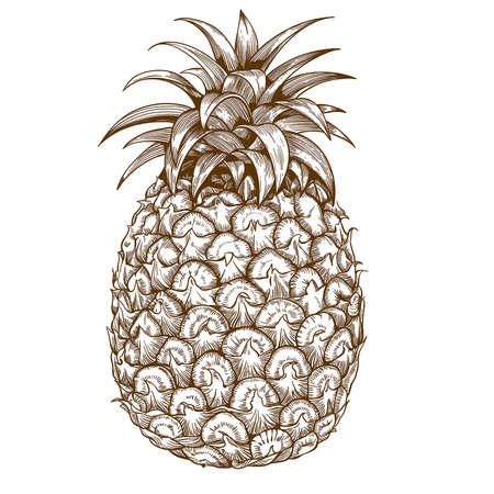 vector graveren illustratie van ananas op een witte achtergrond Stock Illustratie